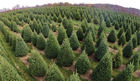 integrated pest management ipm for christmas tree