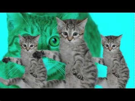 cat song singing cats cat sings jingle bells comiccat
