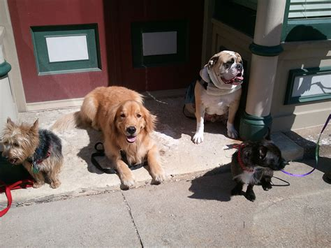 basic obedience basic obedience classes for november 2015 that s my