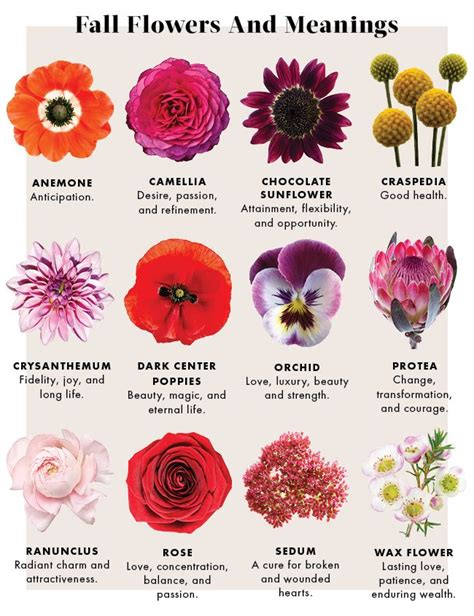 flower color meaning best 25 flower meanings ideas on meaning