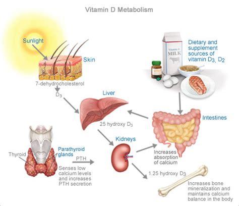 Vitamin Metabolisme What Would Julieanna Do Q A Plant Based Dietitian