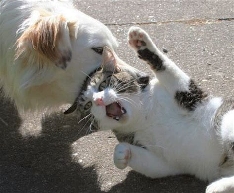 puppies fighting quotes about cats and dogs fighting quotesgram