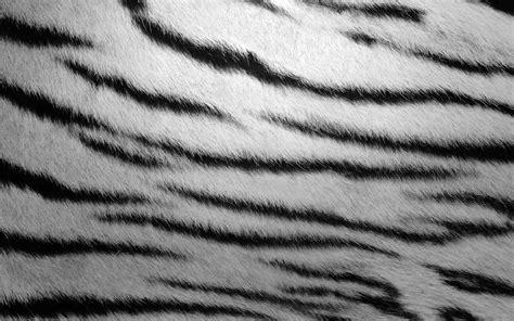 furry zebra print wallpaper for walls fur textures zebra stripes wallpaper 2560x1600 201038
