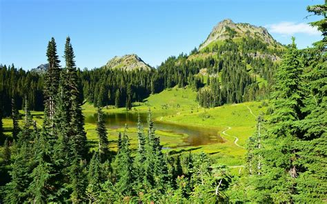 nice green forest lake hills wallpapers nice green