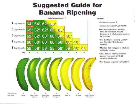fruit ripening banana facts how to ripening bananas banana health