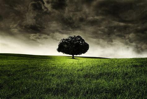 wallpaper hill field tree clouds dark clouds grass