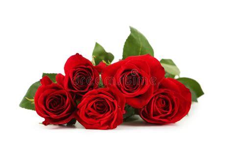 imagenes de rosas rojas frescas cinco rosas rojas frescas en un fondo blanco imagen de