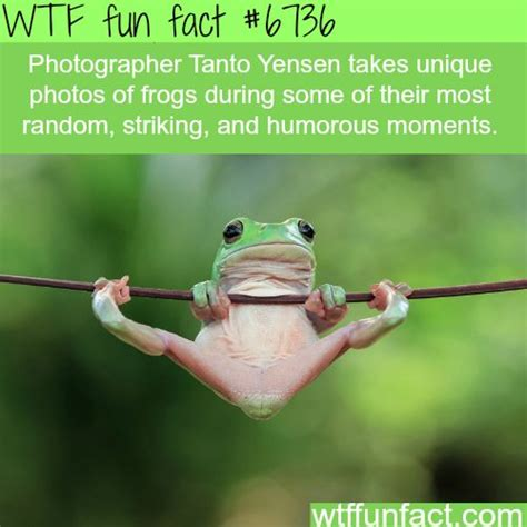Fact Frog Meme - 2491 best images about wtf fun facts on pinterest funny
