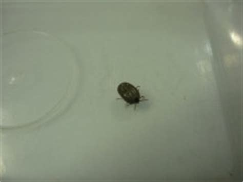 found tick in house how to get rid of ticks around the house 15 best ways