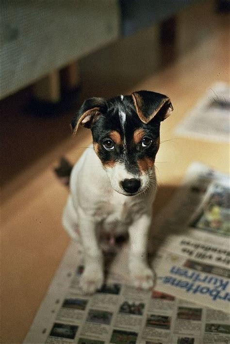 housebreaking a housebreaking a puppy that is paper trained photo