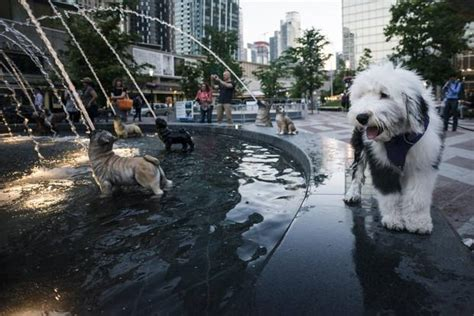 Shepherds Background Check Toronto S Newly Renovated Berczy Park A Place For Everyone And Their The