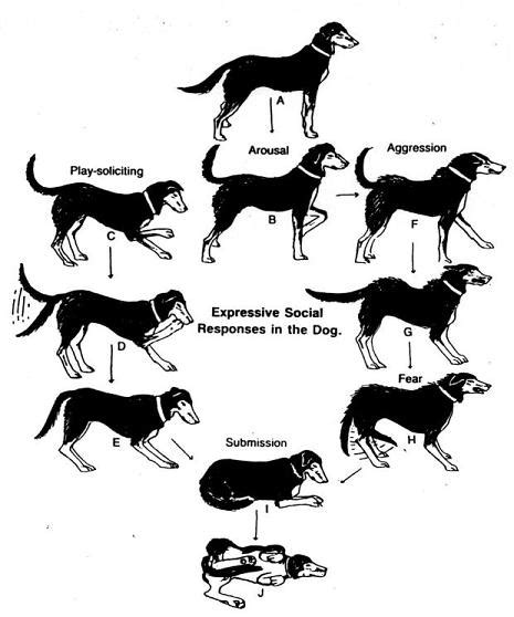 do dogs bones in their tails a logical explanation for dogs to wag their tails canadavetexpress pet care tips