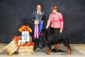 rottweiler puppies boise idaho moxy s gallery 187 2infinity rottweilers
