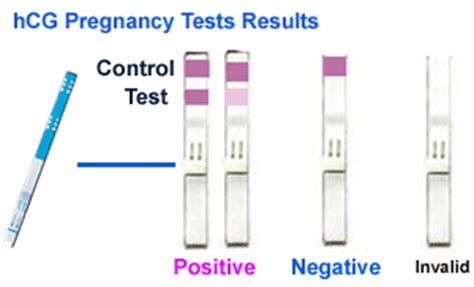 home pregnancy tests 101 ovulation calculator page 2