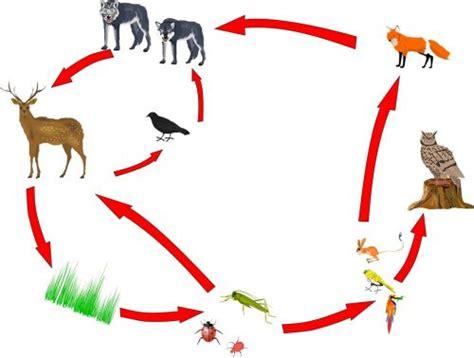 significado de cadenas alimenticias imagen de una cadena alimenticia terrestre cryptorich