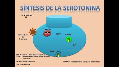 alimentos serotonina salud estos son los alimentos que te deprimen