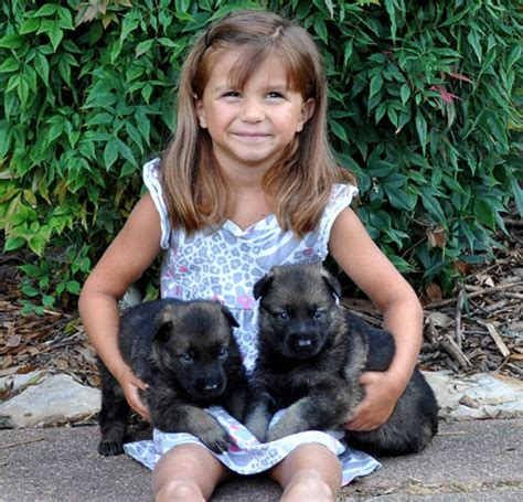 german shepherd puppies for sale in washington state puppies