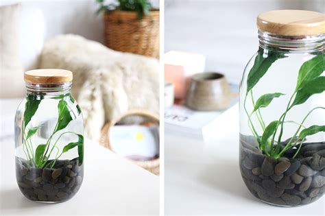 how to make a your own indoor water plant eclectic creative