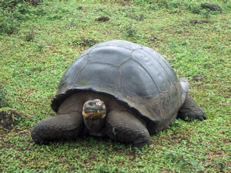7 Amazing Animals From The Galapagos Islands by Wildlife In Galapagos Islands Andean Trails