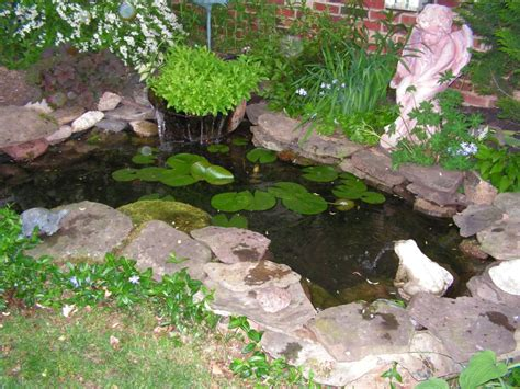 water ponding in backyard goldfish ponds water gardens the pond doctor