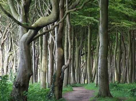 nienhagen wood alemanha nienhagen wood germany nienhagen wood stock photos