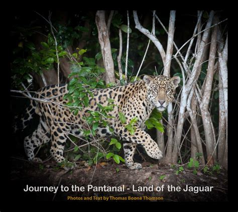 journey to the land of the inca books journey to the pantanal land of the jaguar by tom