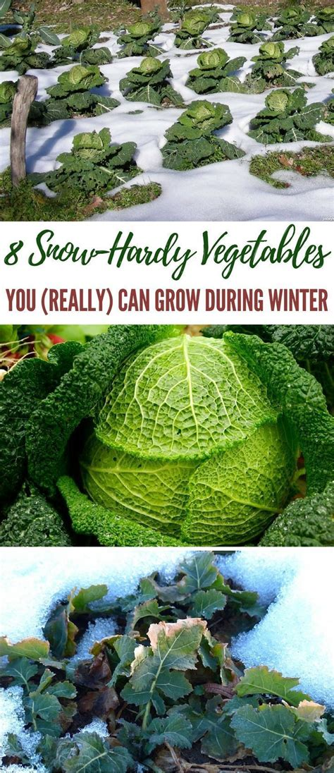 the 25 best winter vegetable gardening ideas on