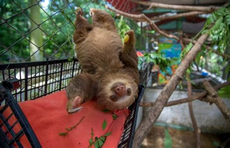 costa rica rescue animal rescue and conservation