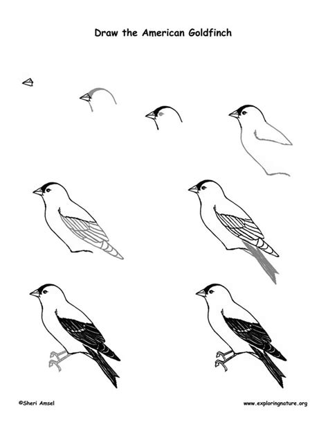 American Goldfinch Coloring Pages