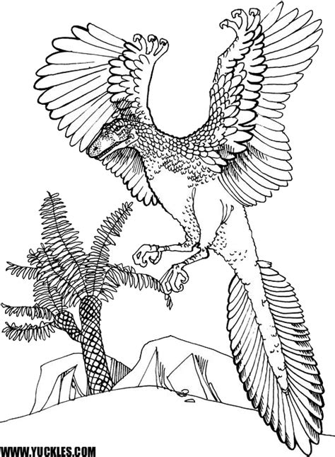 archaeopteryx coloring page by yuckles