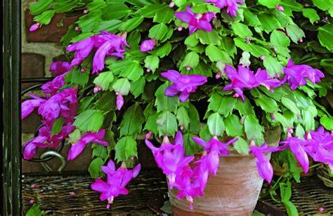 fiche de culture les plantes d int 233 rieur