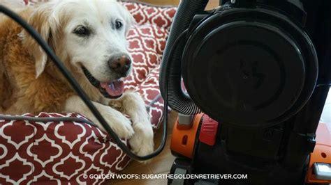 best brush for golden retriever best vacuum golden retriever dogs our friends photo