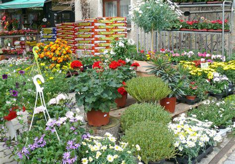 Blumen Und Pflanzen by Blumen Und Pflanzen Gitterseeflorist In Dresden