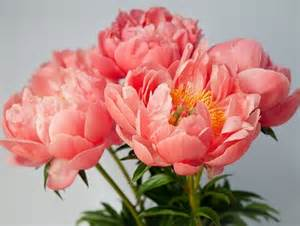 peonies 7 types of flowers to pick for a winter wedding