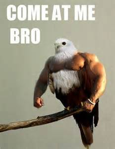 Come At Me Meme - come at me bro grapplers planet