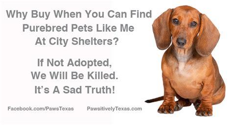 adoptapet dogs adopt a pet pet adoption animal rescue pawsitively