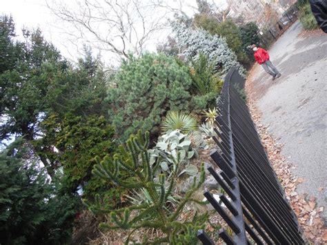 Bay Ridge Gardens by Visit A Tucked Away Botanical Garden In Bay Ridge
