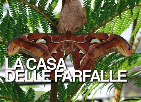 casa farfalle montegrotto la casa delle farfalle metropolitanotv