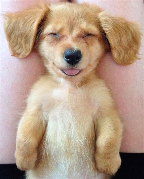 smiling puppy top 35 smiling animals that are really soupoffun