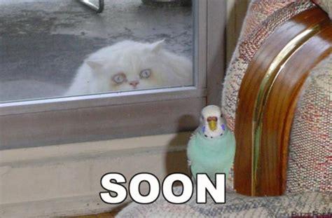 Soon Meme - soon weknowmemes