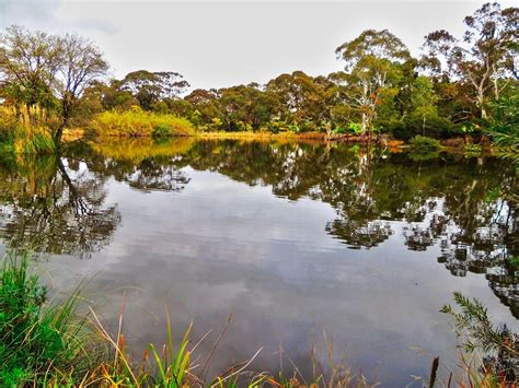 Wittunga Botanic Gardens Wittunga Botanic Garden Adelaide