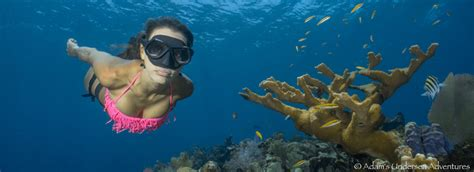 roatan dive roatan diving infinity divers dive shop west bay