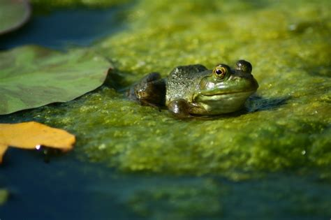 backyard frog pond 20 magical ways to make your garden a wildlife paradise