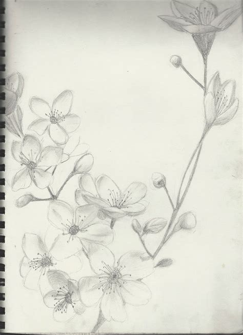 black and white cherry blossom tattoo simple black and white cherry blossom sketch