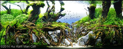 aquascape reviews 2014 aga aquascaping contest 573
