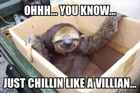 Cute Sloth Meme - funny animal memes part 5