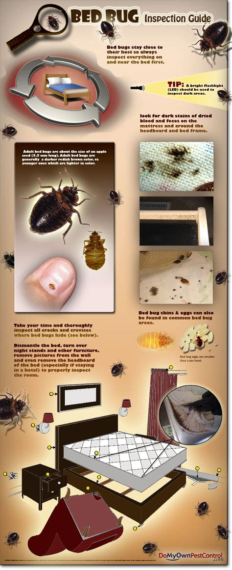 Free Bed Bug Inspection by Bedlam Bed Bug Spray Bedlam Aerosol Bedlam Insecticide