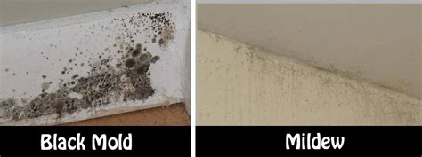 what is black mold in bathroom natural and simple solutions to rid your home of mold and
