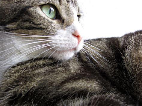 katze alleine halten wohnung katzen allgemeine infos orthop 228 discher katzenkorb und