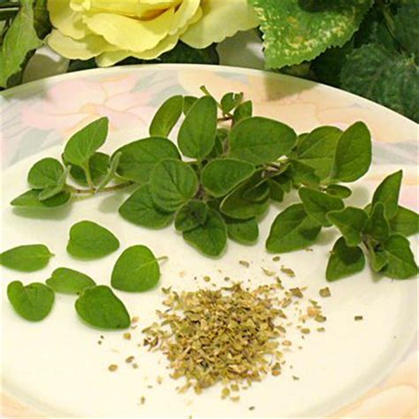 oregano cooking tips substitutions and measures